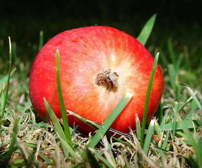 吃苹果对牛皮癣患者有什么好处 牛皮癣患者注意事项